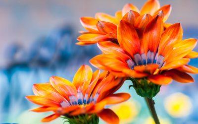 jardin-fleur-catégorie