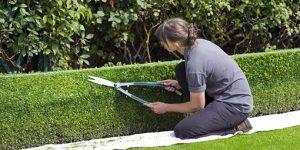Où trouver un paysagiste qualifié pour le devis de votre jardin?