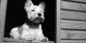 Le chenil, un enclos pour votre chien